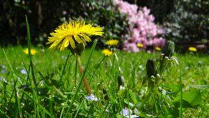 Wiosenne zioła w dietach