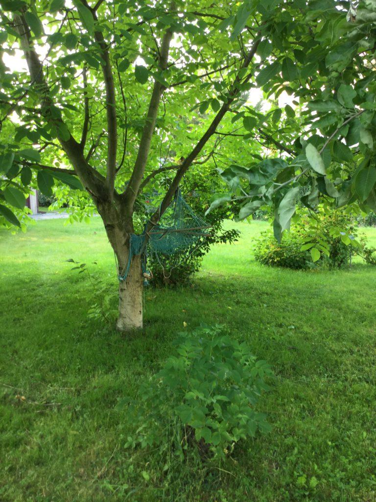 ogród, drzewa