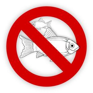 Zakaz jedzenia ryb