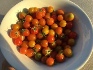 Zdrowe pomidorki a dieta